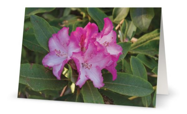 Flower photo greeting card