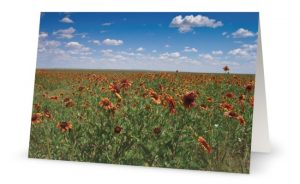 Flowers in field greeting card